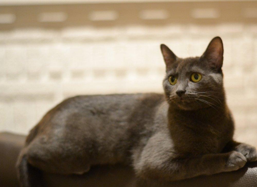 Watson la chatte