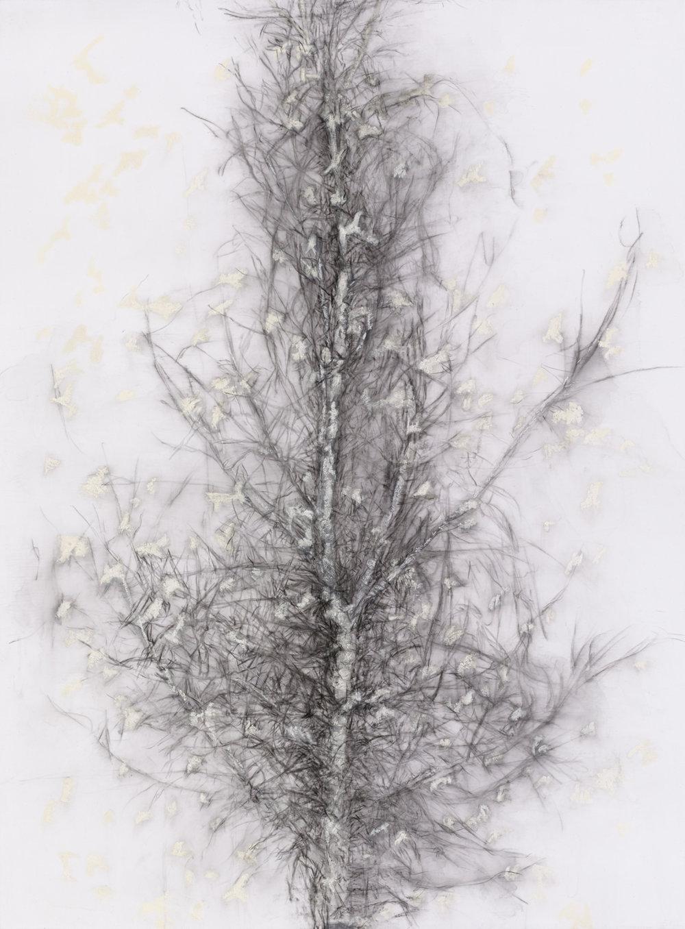 Birds Tree 2014