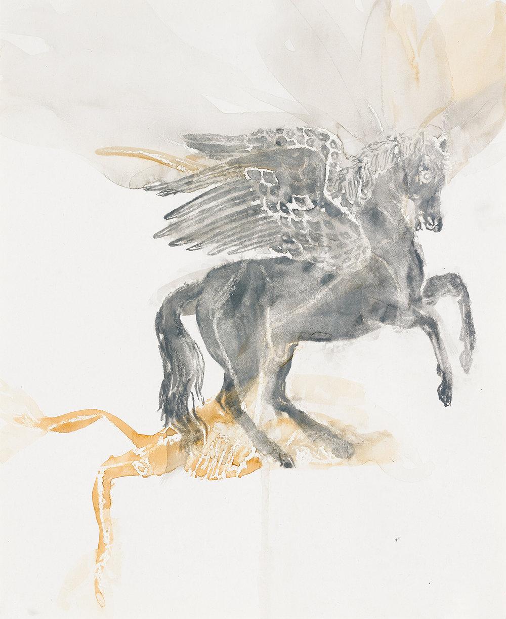 Pegasus Flying Fox 2017