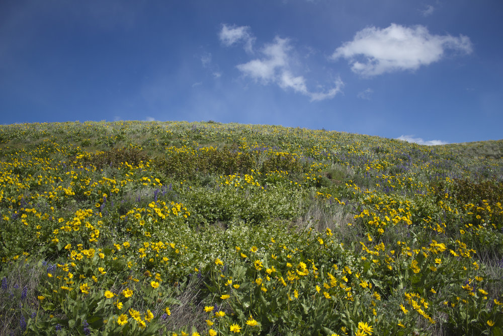 hillside-wildflowers.jpg