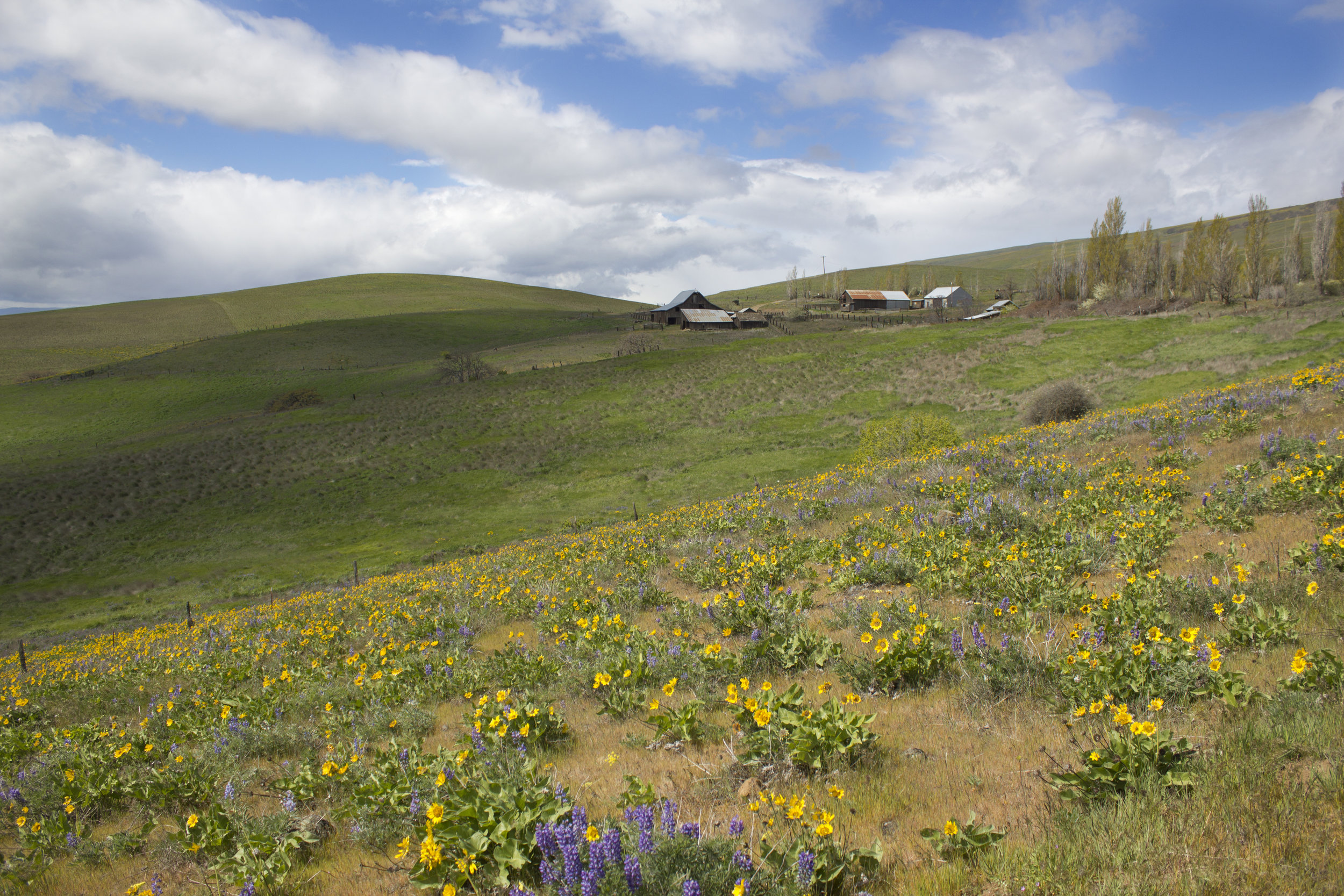 Dalles Mountain Ranch complex