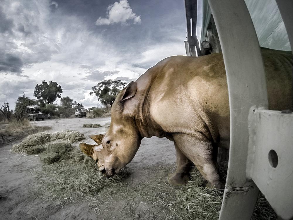 rhino release bots.jpg