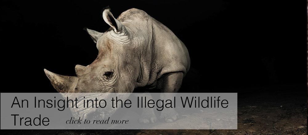 Rhino Banner Story MAAC.jpg