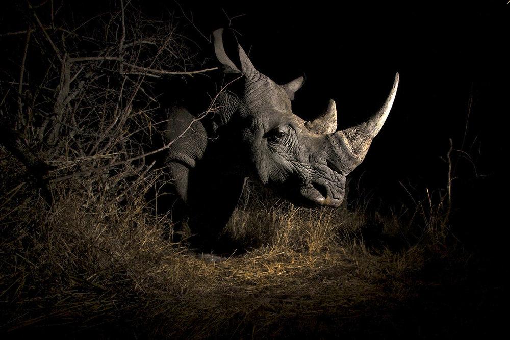 rhino-remote.jpg