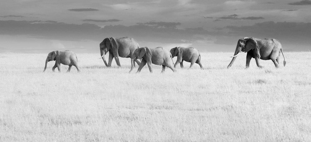 Animals-1_o.jpg