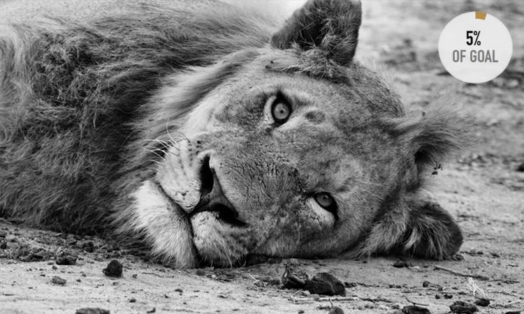 LION GUARDIANS