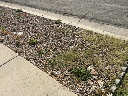 Gravel and Weeds - web.jpg