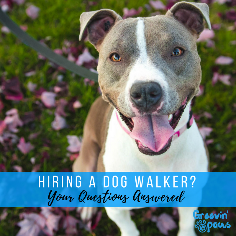 Hiring a Professional Dog Walker Mt. Pleasant.png