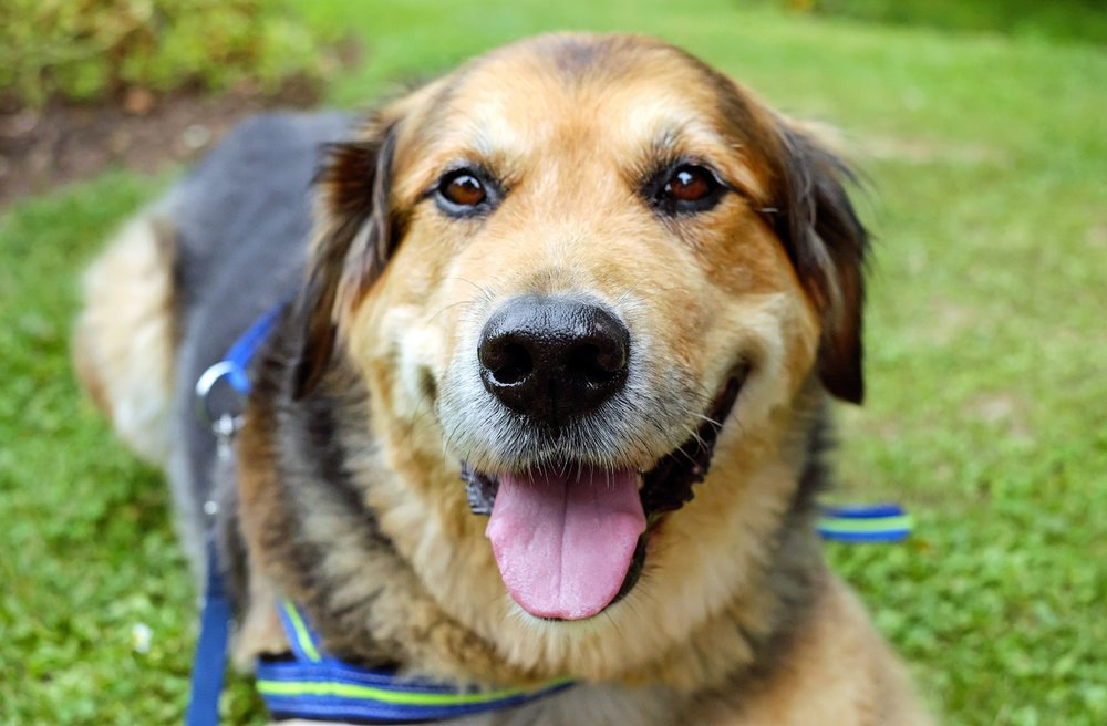 DOG WALKING SERVICES - Daily dog walking is fantastic for your pup's physical and mental health. We recommend regular walks in order to create and establish meaningful bonds between you, your pup, and your walker. Your pup's daily walk is designed to meet their specific needs. We are always excited to welcome new clients to the pack of Groovin' Paws!