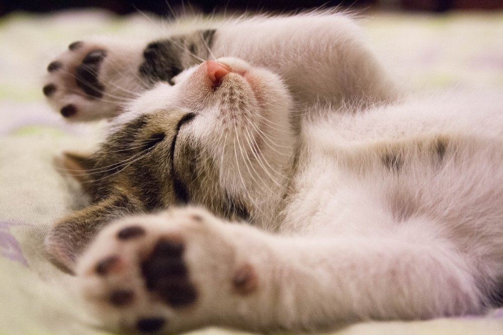 CAT SITTING SERVICES - Kitties have different needs and personalities just like us, and we will cater to them! We will keep them on their regular feeding schedule, clean their litter, and make sure your home is secure while you are away.