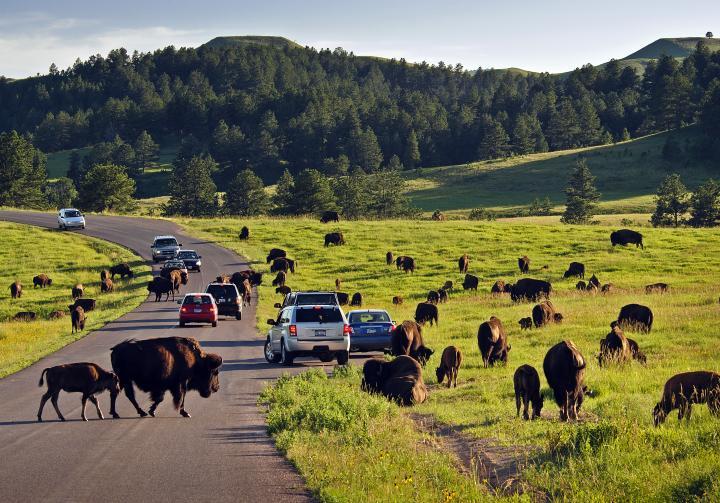 custer-state-park-650.jpg.jpg