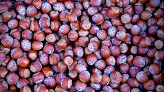 Hazelnuts, a Welli favorite!