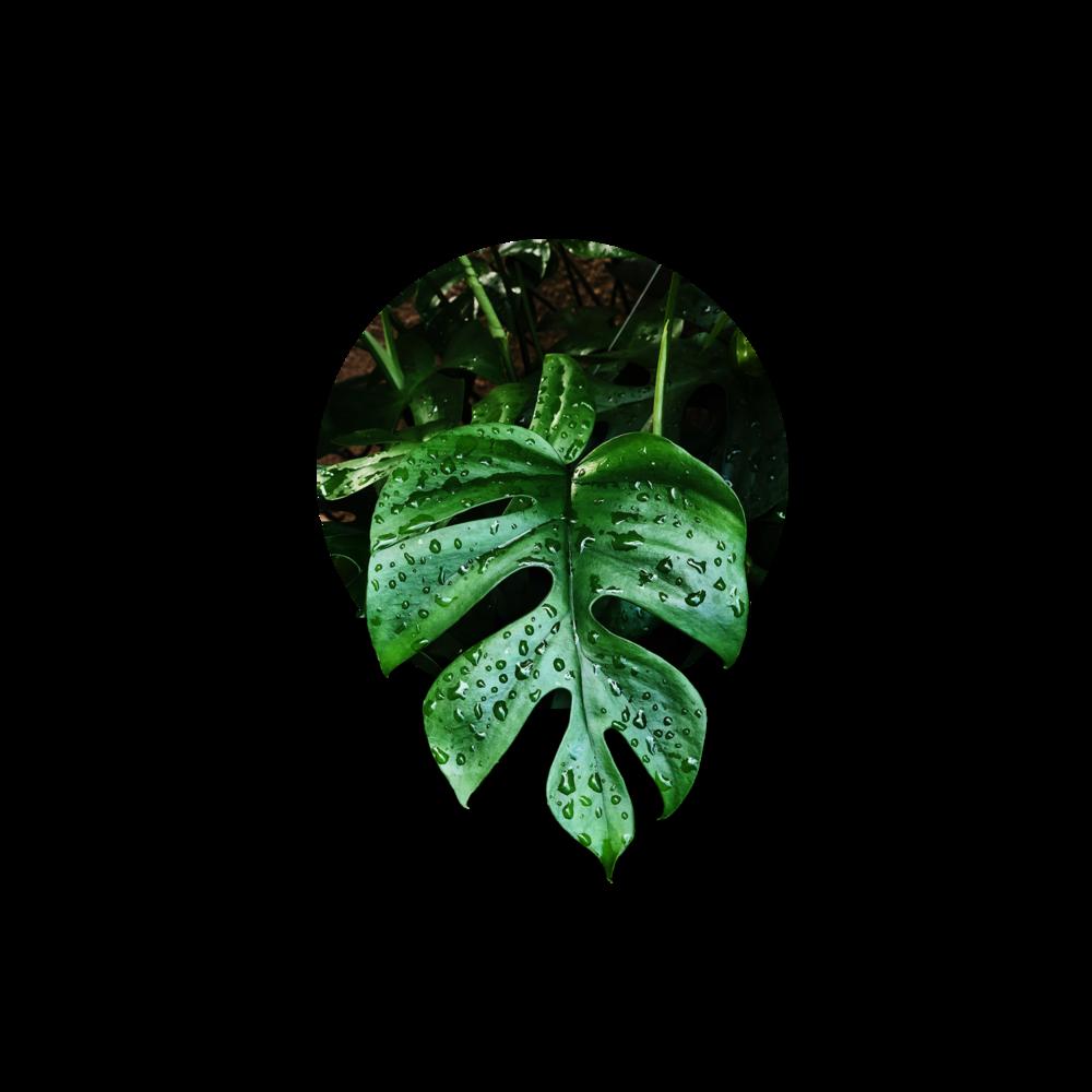 RARE PLANTS HERE -