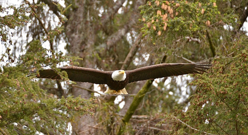 Eagle, William Stortz.jpg
