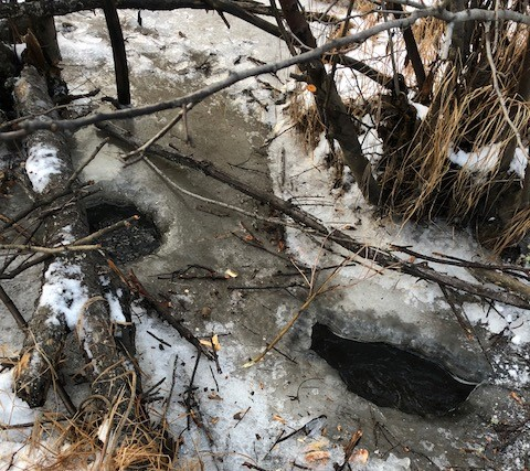 beaver hole in the ice.jpg