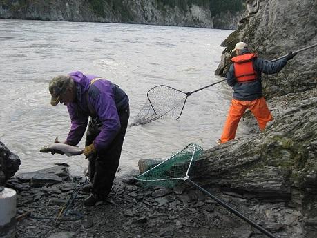 Dipnetting salmon, Copper River