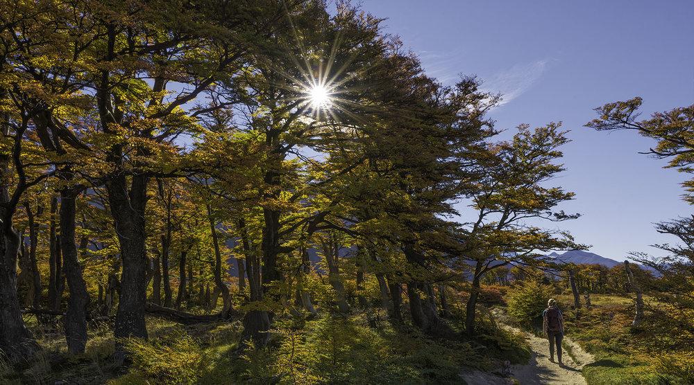 Autumn in Parque Nacional Los Glaciares - Patagonia