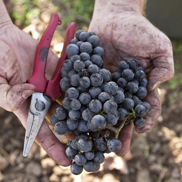 Úcta k tradícii, žvot v generáciach, spoluúčasť na zázraku stvorenia a viera v budúcnosť našej krásnej planéty, to sú hodnoty, ktoré ovplyvňujú náš každodenný život.    Preto sme nadviazali na rodinnú tradíciu z roku 1931, preto v našom rodinnom vinárstve spolupracujú tri generácie a preto pestujeme vinič a ďálšie plodiny bez použitia herbicídov, pesticídov a systémových chemických prípravkov. Veríme, že hrozno samo vydá zo seba to najlepšie, my mu poskytujeme iba pokoj a čas, aby vo víne mohlo naplno prejaviť odrodové charakteristiky a jedinečný terroir Ružovej a Vlčej doliny. Snažíme sa o rovnováhu, harmóniu a autentickosť, ktoré možno nájsť aj v našich vínach.