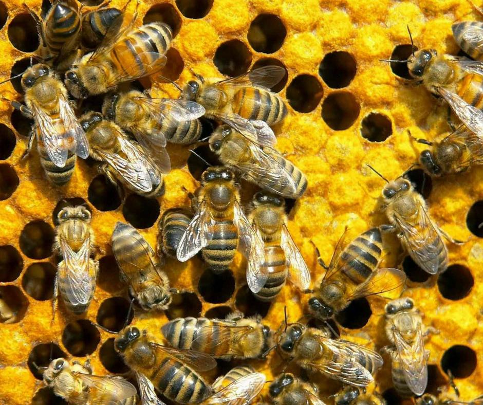 VČELÁRSTVO BLAŠKO - odinné včelárstvo Blaško kde sa včeláreniu venujú dve generácie - otec spolu s dvomi synmi. Venujú sa včelím produktom - ich výrobe a využitiu