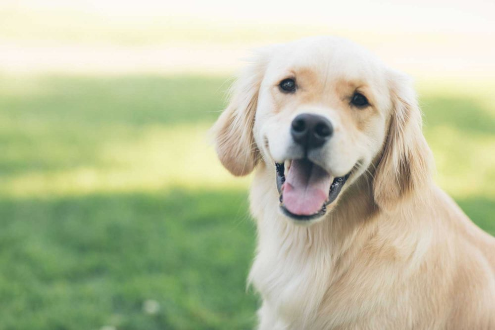 PRIVATE DOG RUN - Feel free to take your favorite canine off leash when you arrive at the 6th floor outdoor dog run. Accessible and available day and night, this resident-exclusive dog run grants your pup the opportunity for a good romp and you the convenience of staying home.