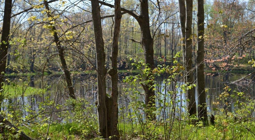pond:trees.JPG