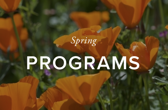Spring program image homepage.png