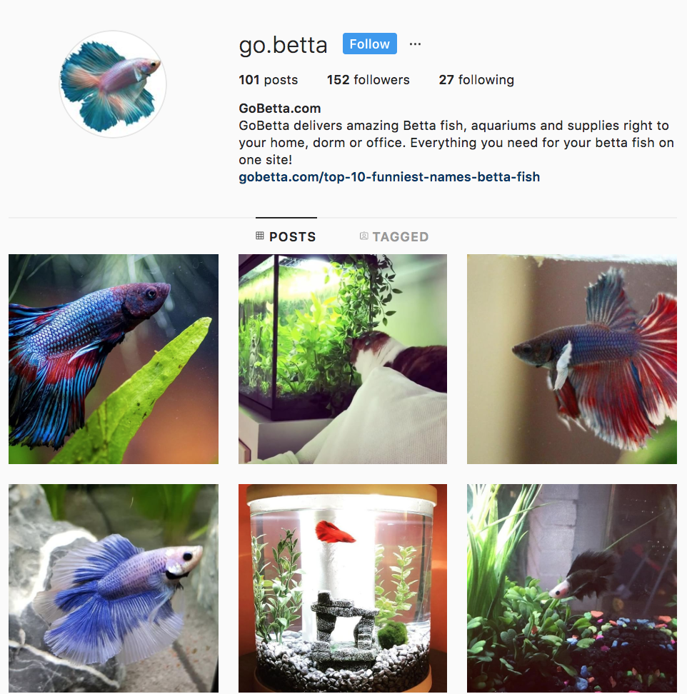 Betta Instagram Homepage July 2018