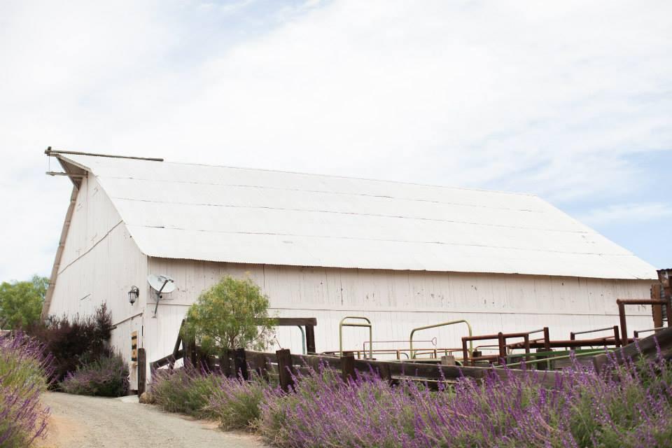 california wedding venue: spreafico farms