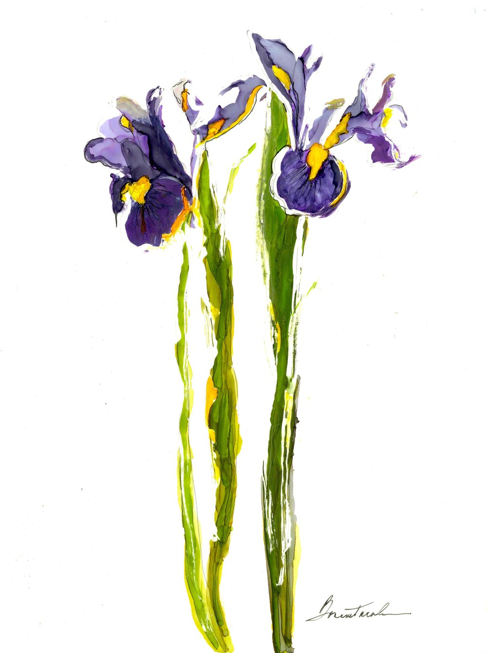 Irises for Bil.jpg