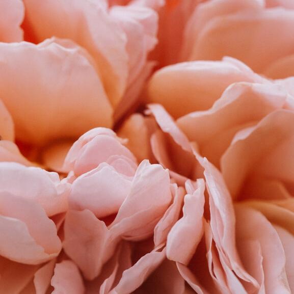 rosacea.jpg