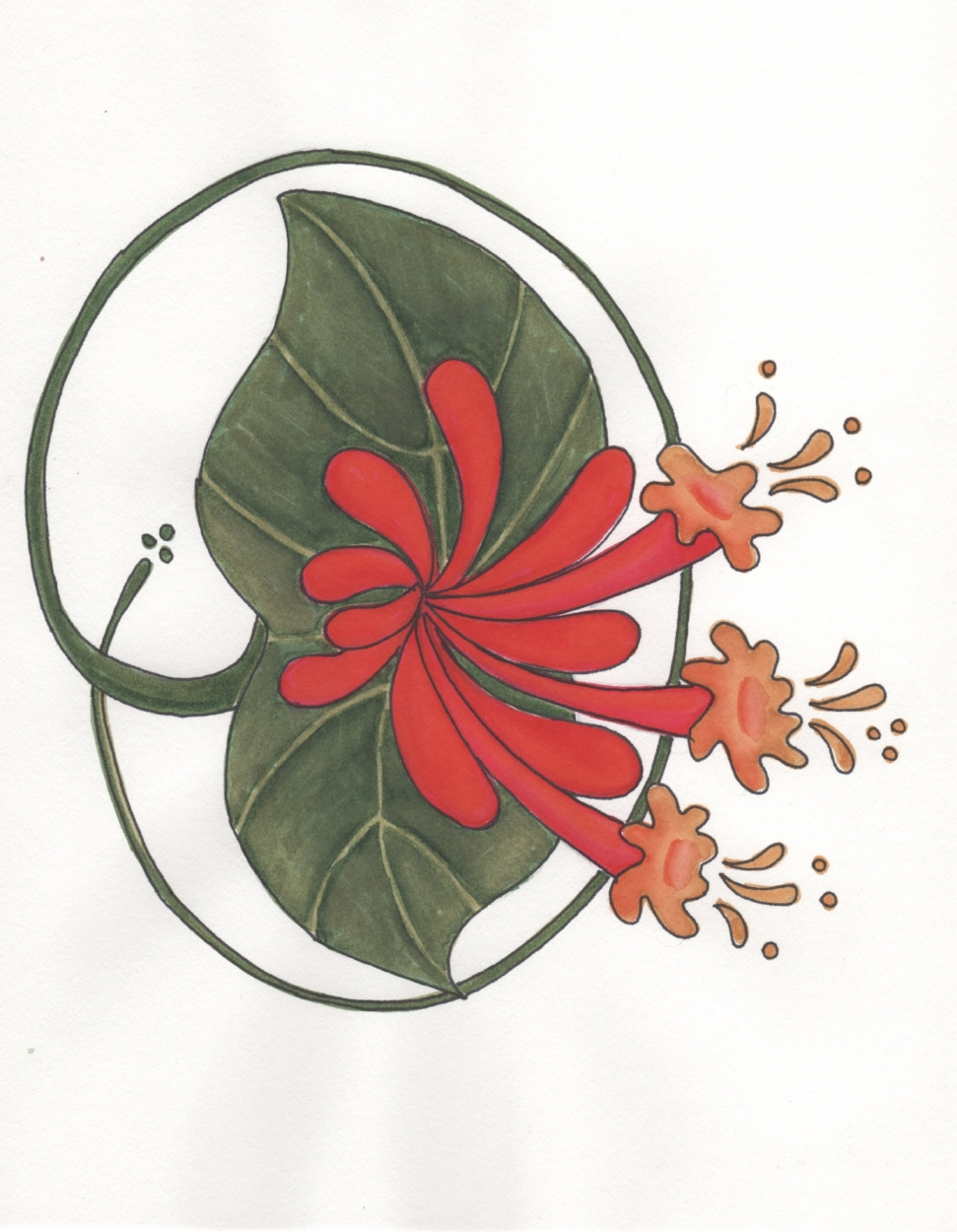 Orange  Honeysuckle (Lonicera ciliosa) logo by Vicki Brigden