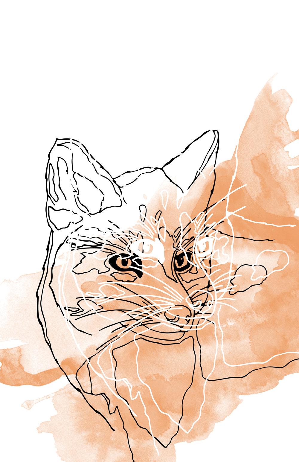 Fox_Illustration_web.jpg