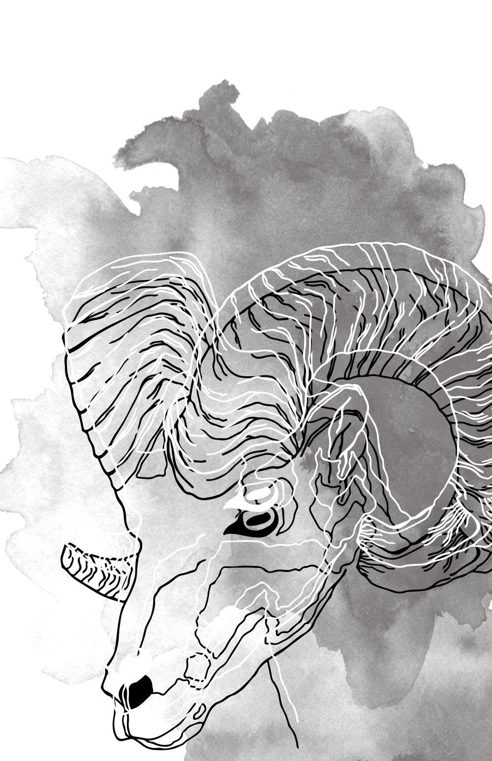 goat Illustration.jpg