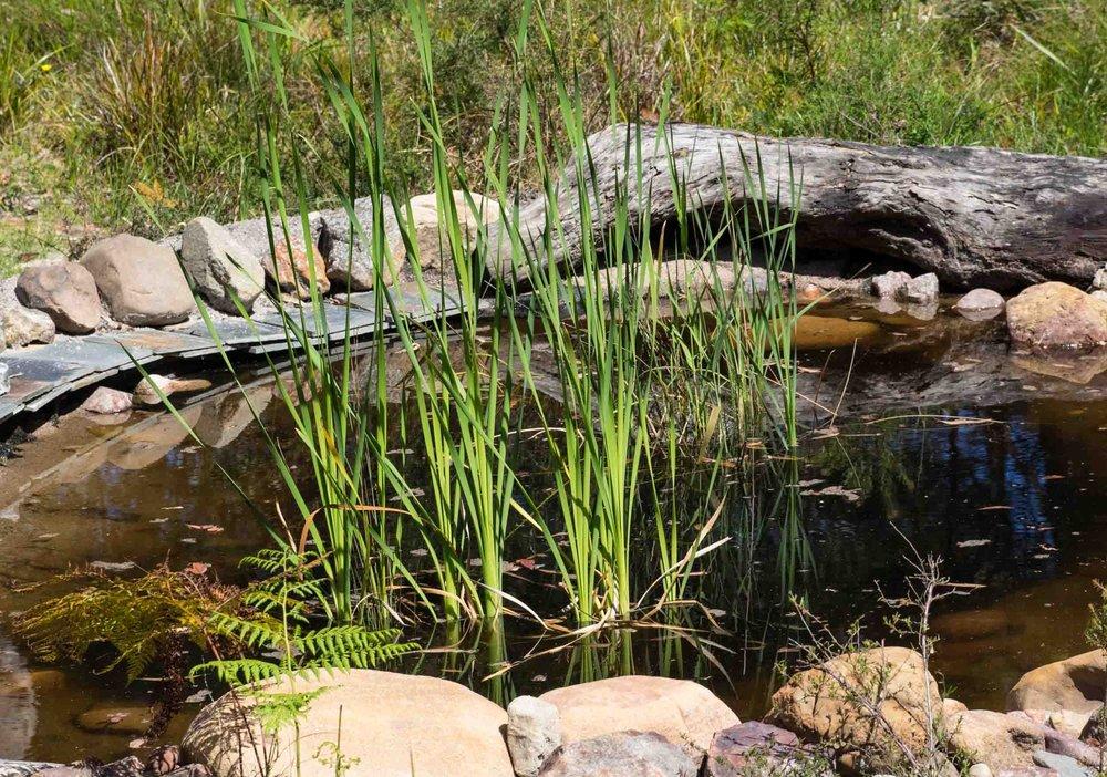Our Frog Bog! -