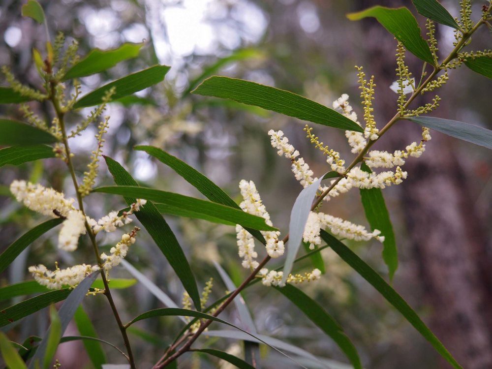 Wattles Surprisingly Diverse Life In A Southern Forest