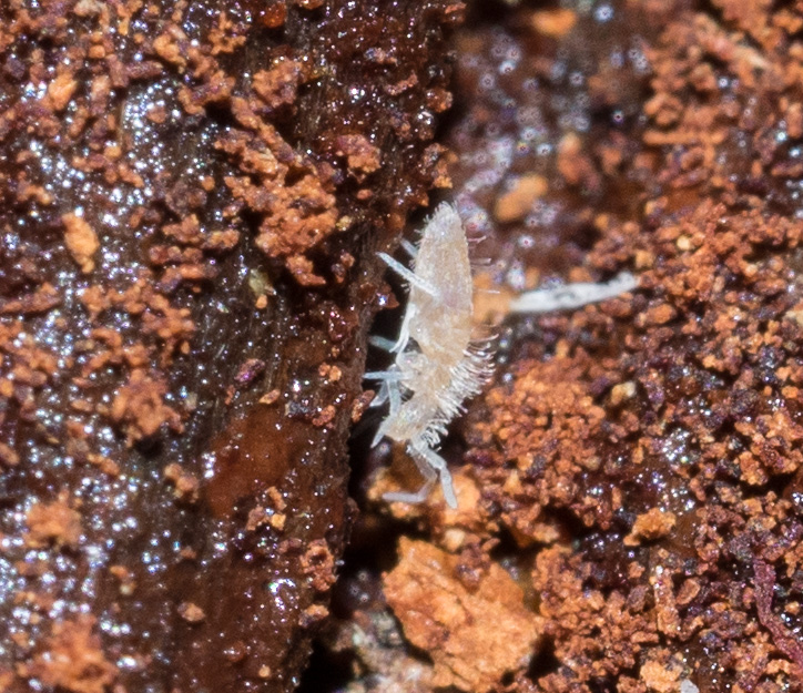 These collembolans are small enough to move around the narrowest spaces in the log.