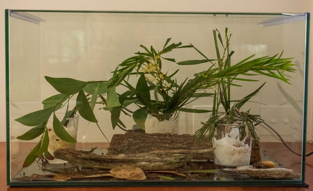 The 'buddy' tank as it appears today - it changes, depending on who lives there.