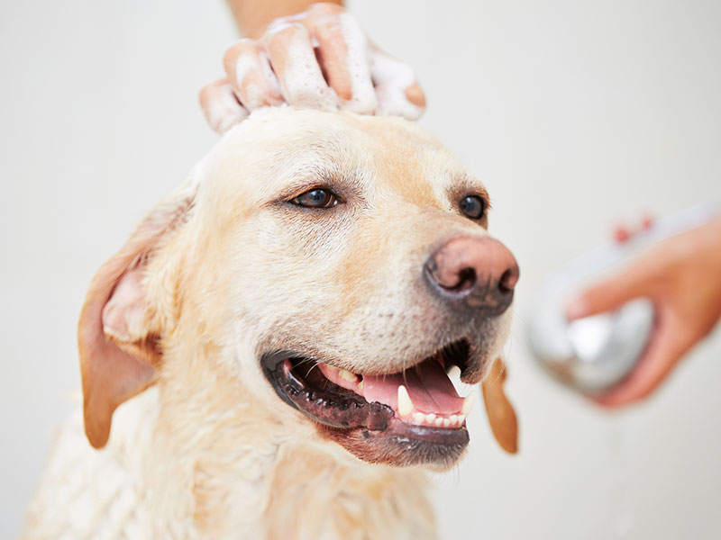 Choosing-Dog-shampoo-Andys-Grooming-daycare.jpg