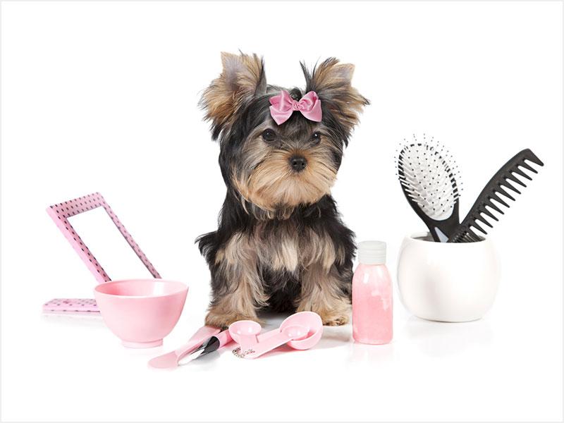 Grooming - SHORT HAIRS$40 |M$45 |L$60 |XL $65 & Up  LONG HAIRS$45 |M$50 |L$65 |XL$80 & Up
