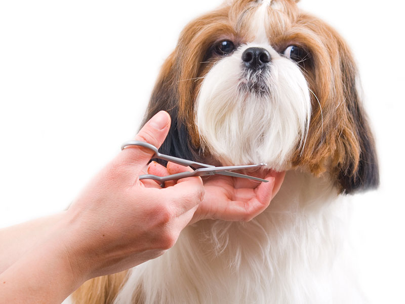 ADD-ONS - TEETH BRUSHING $15                          DE-MATT/DE-SHED $10EAR CLEANING $5 (Free with Grooming)TRIMS $10 (Face) | $10 (Paws)SANITARY TRIM S $5 | M $5 | L $10 | XL $10ANAL GLAND EXPRESSION $15 (Free with Grooming)