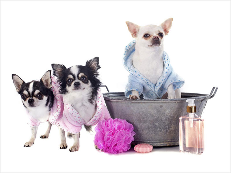 Shampoo Treatments - ALOE SHAMPOO $5            OATMEAL SHAMPOO $5     DE-SKUNKING TREATMENT $20