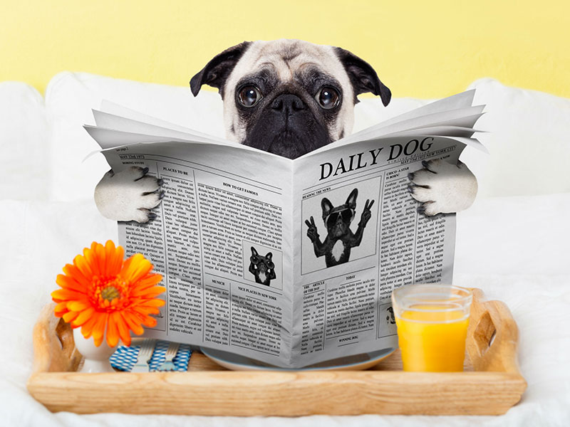 pup-reading-newspaper.jpg