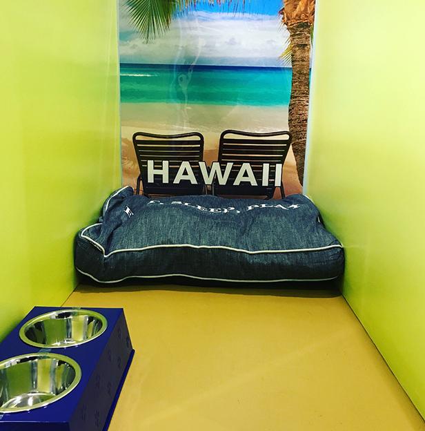 Hawaii-Boarding-Room-Andys-Pet-Grooming-Daycare.jpg