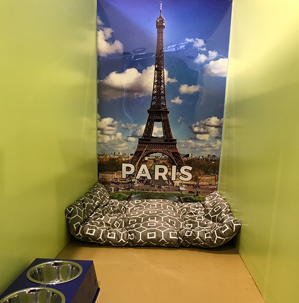 Paris-Boarding-Room-Andys-Pet-Grooming-Daycare.jpg