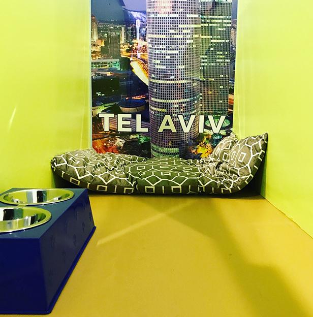 Tel-Aviv-Boarding-Room-Andys-Pet-Grooming-Daycare.jpg