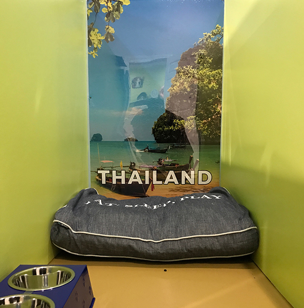 Thailand-Boarding-Room-Andys-Pet-Grooming-Daycare.jpg