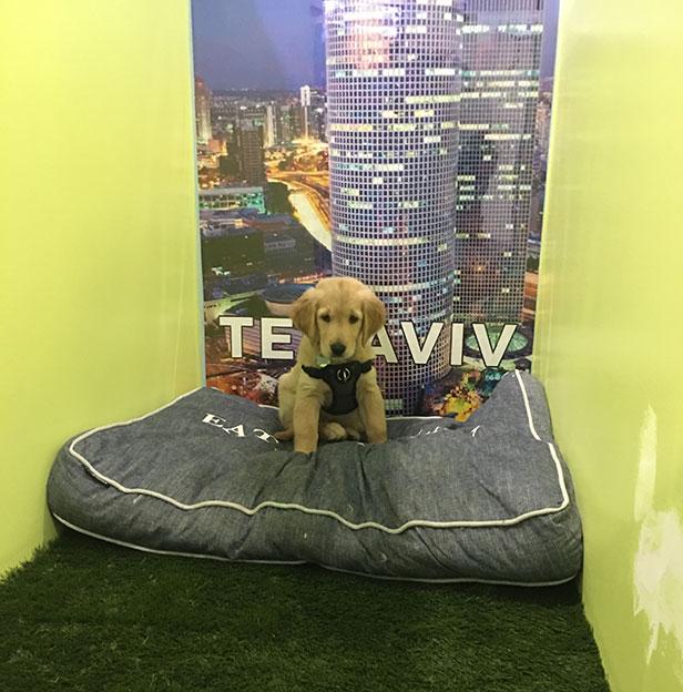 Tel-Aviv-Boarding-Room-Andys-Pet-Grooming-Daycare-German-Sherpard.jpg