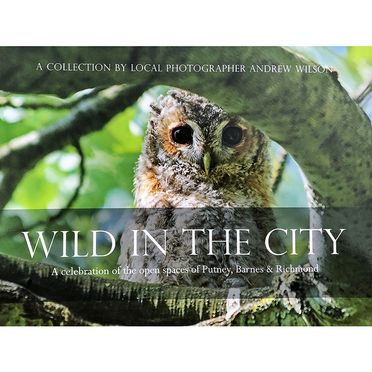 WILD ABOUT THE CITY1500.jpg