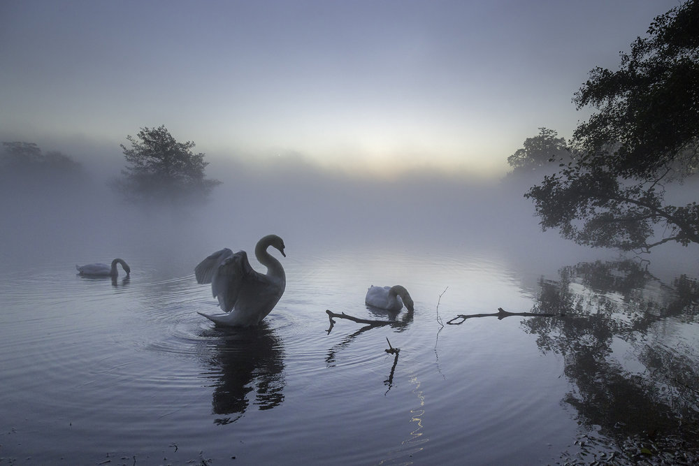For the love of a swan - Richmond Park - Web Ready.jpg