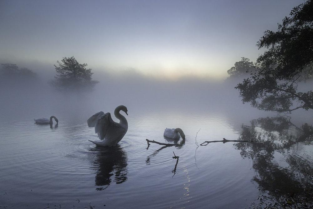 For the love of a swan - Richmond Park - Web Ready.jpg